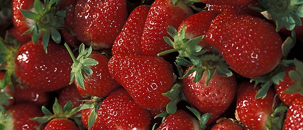 Chandler strawberries - USDA ARS - K7726-1