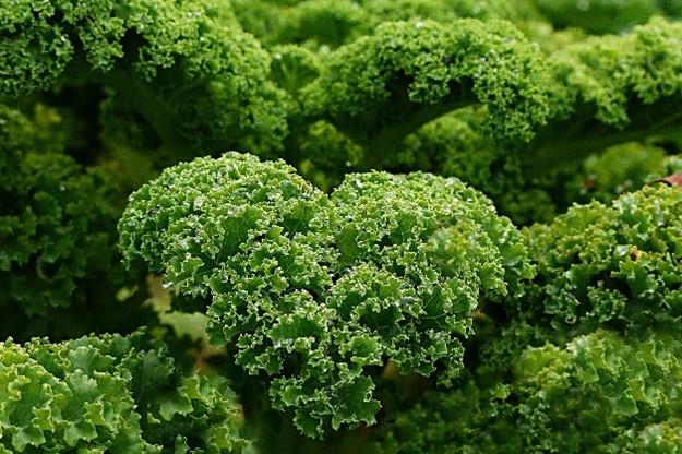Curly Kale by Oldiefan via Pixabay.com