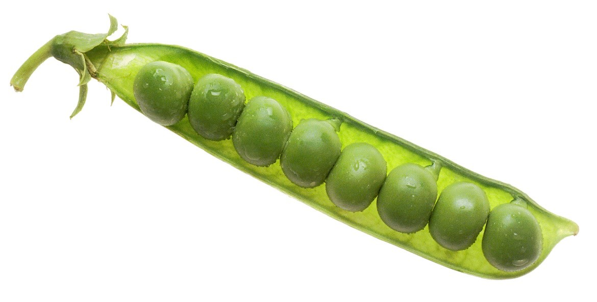 National Cancer Institute: Peas in pod