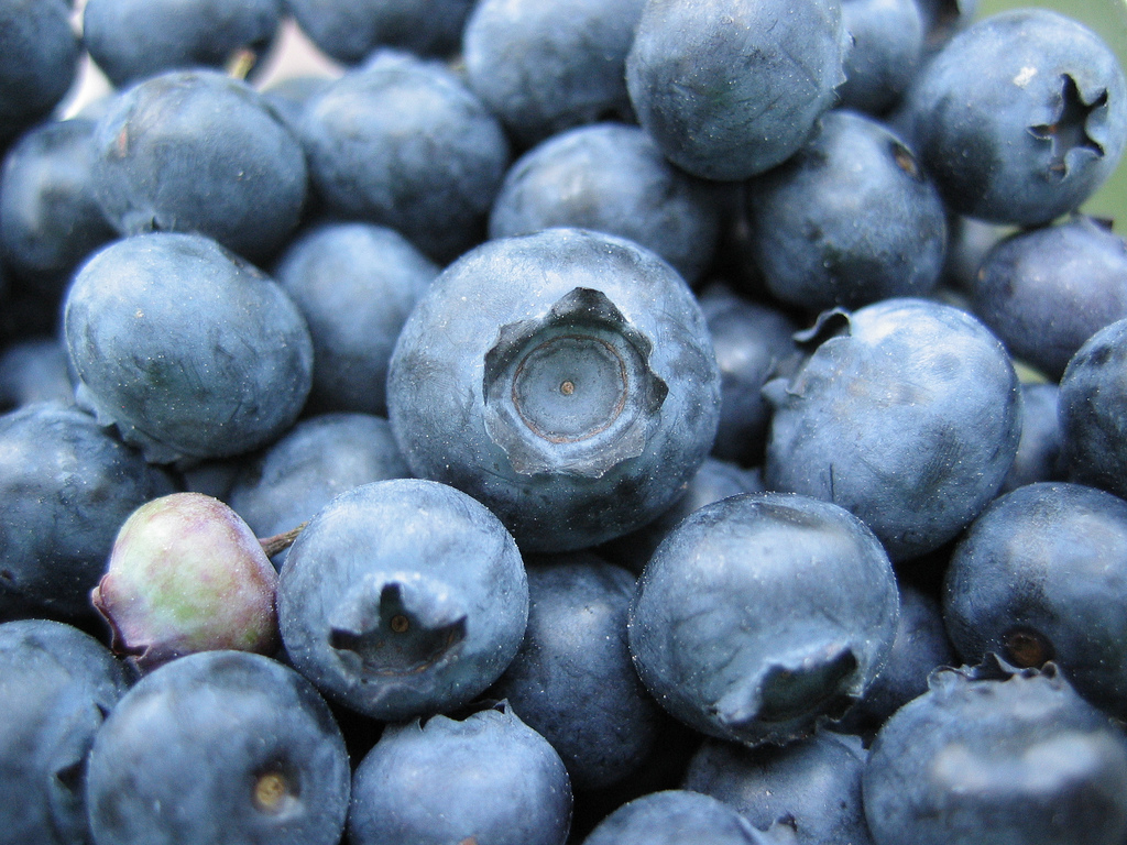 Bunch of blueberries, one unripe